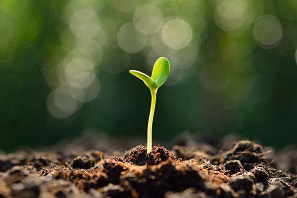 Stewardship fabric of faith and life