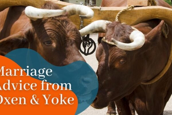 Marriage Advice from Oxen and Yoke